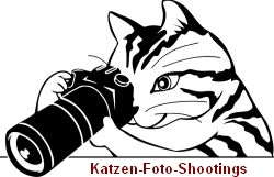 Katzenfoto-Shootings - Fotodesigner Pavel Kerbic