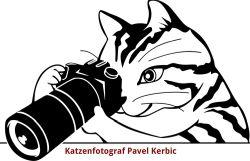 Katzenfotografie Pavel Kerbic